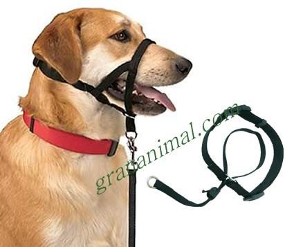 Collar de adiestramiento para perros