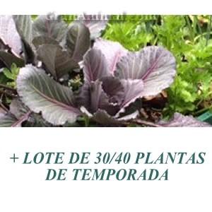 LOTE DE 30/40 PLANTAS